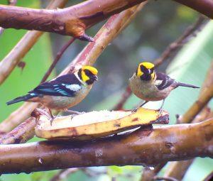 family birds in mindo