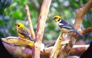 birds in mindo ecuador tour