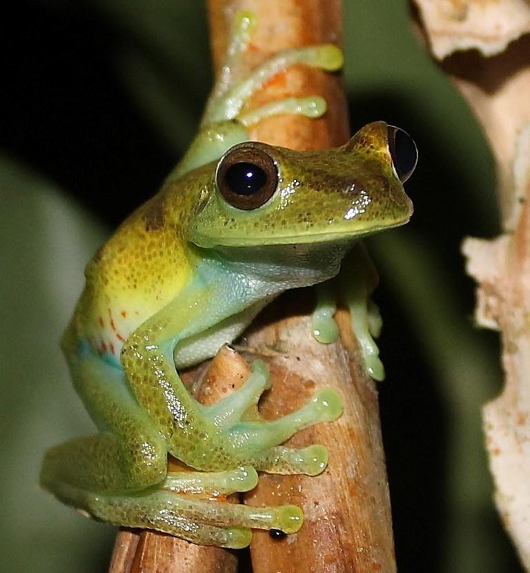 frog ecuador