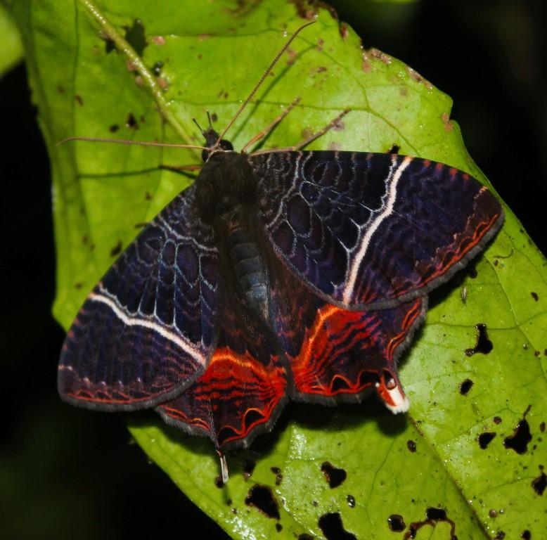 butterfly mindo