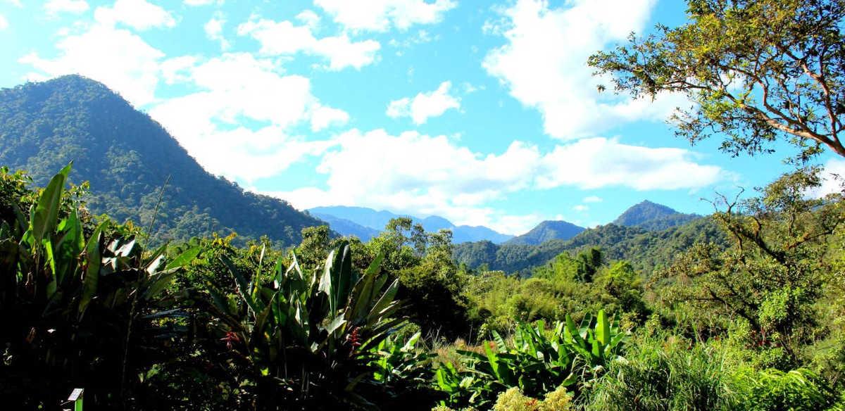 landscape mindo ecuador