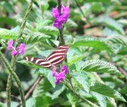 mariposa Medium