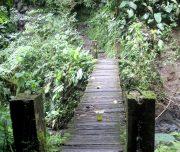 puente Medium