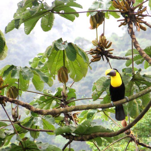 Mindo | Special Birding Tour – 4 days