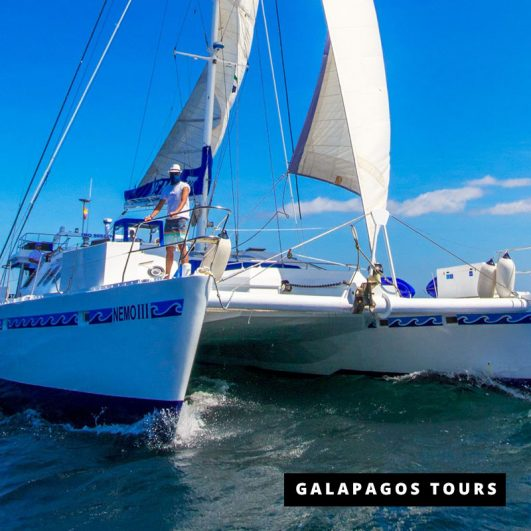 Nemo III Motor Sail Catamaran