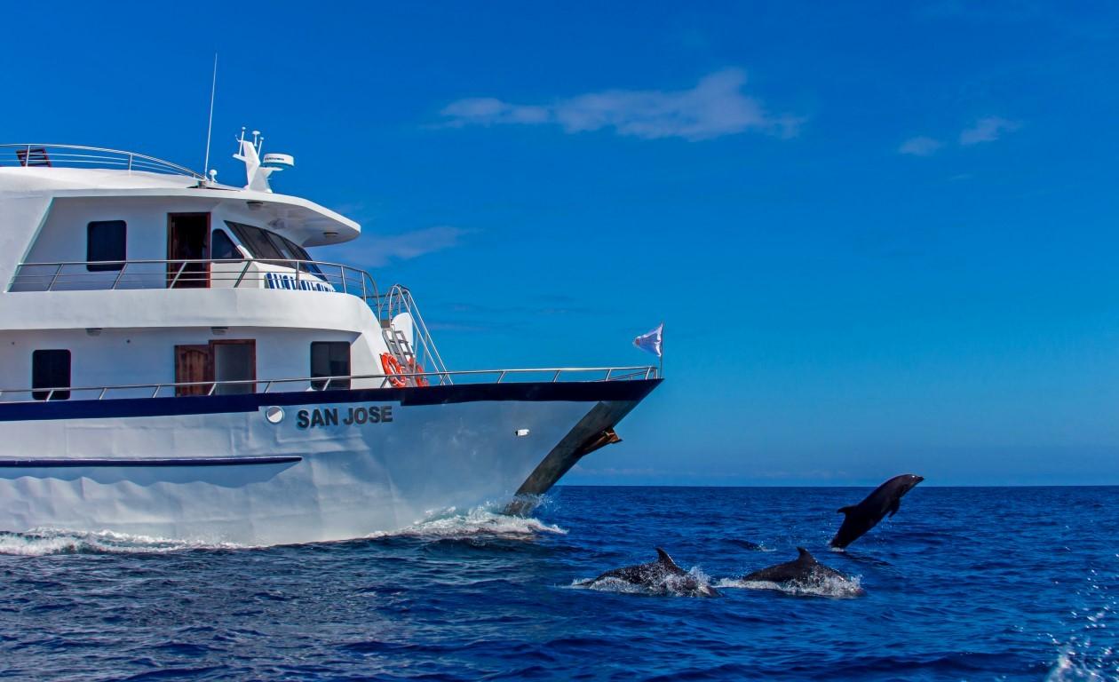 4-san-jose-dolphins