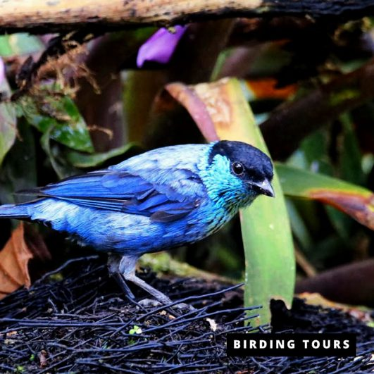 Mindo | Superior Birding Tour – 5 days