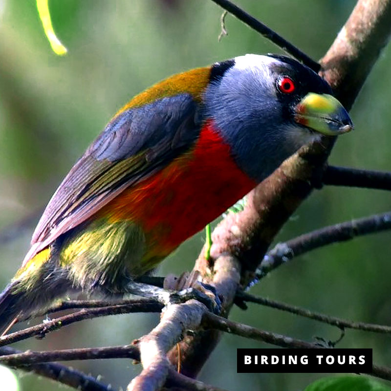 Advanced-Birding-Tour---6-days