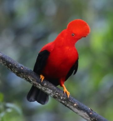 Mindo Birdwatching and Aventure Paradise close to Quito