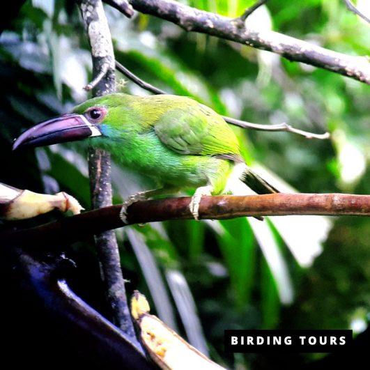 Ecuador | Complete Birding Tour – 15 days