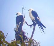 Mindo birding tour