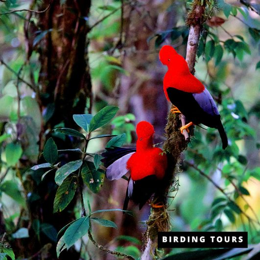 Northwest and East Slope Birding Tour 11 days - Birdwatching Galapagos Cruises