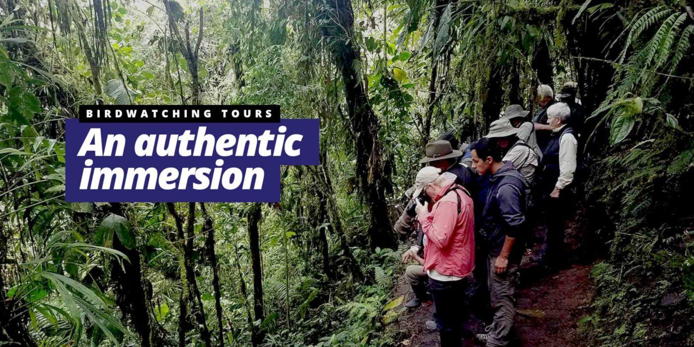 Birding in Ecuador