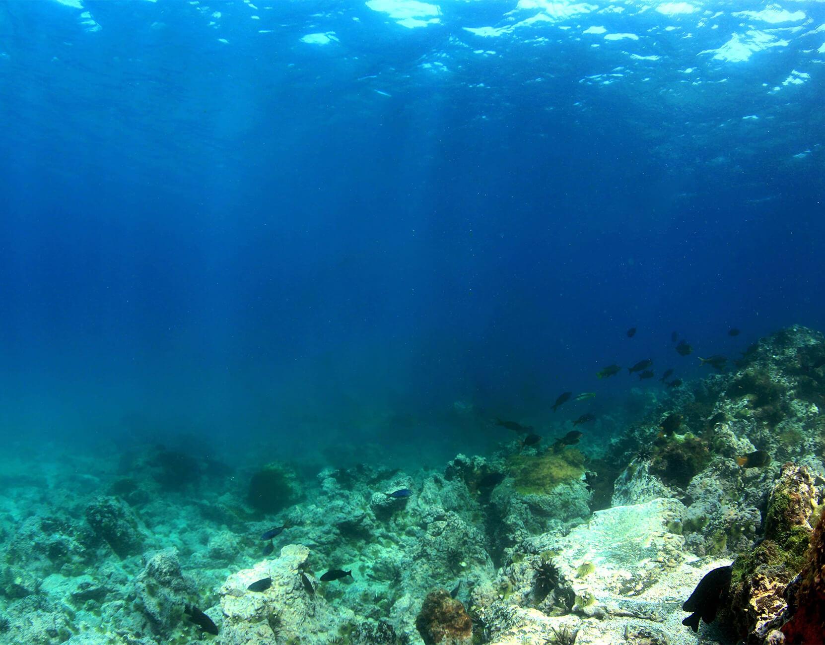 galapagos-sea