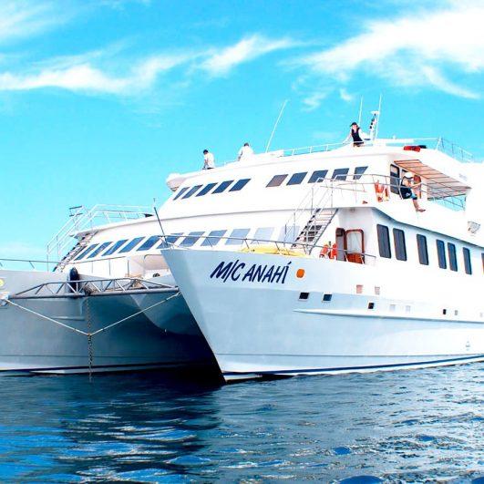 Anahi450 - Birdwatching Galapagos Cruises